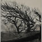 Starkly drawn bending trees, on a corner of a road against a winter sky.